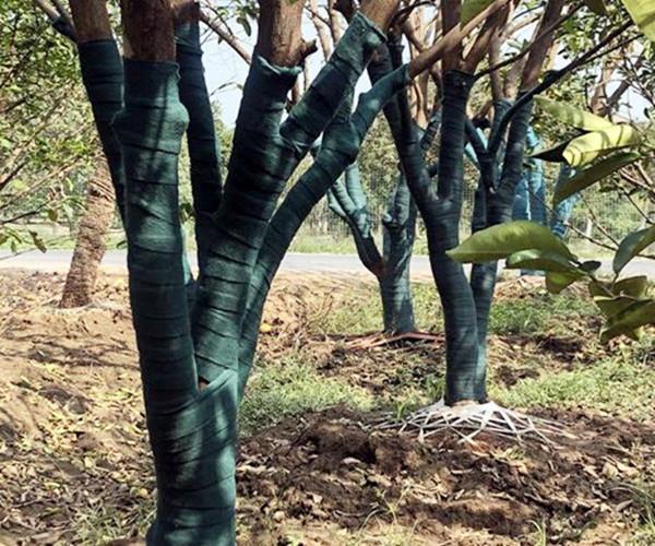 石家庄树木缠树布批发商